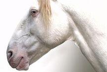 MBJ - White Angels among animals / White Animals - Albino or not