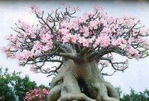 Trees / Nature