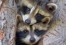 Nature / Animals / by Gregg Bryant