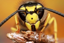 Macro Photography / by Gregg Bryant
