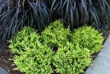 Garden Ideas / by Teka Israel