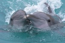 Dolphins,Whales,Orca's / by Gregg Bryant