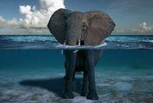 Elephants / Elephants / by Gregg Bryant