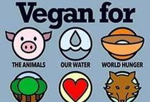 Reasons To Go Vegan / Need more reasons to go vegan? Look no further!