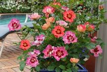 Containerology / The Science of Container Gardening - both indoors and out!