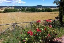 Italian Countryside / The Italian countryside at Agriturismo Monte Roio, Valentano, Latium, Italy