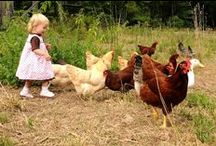 wish list...backyard chickens / Even though my husband thinks that I am simply crazy...I hope to own my own Willamiana some day... / by Angela Lacey-Parrish