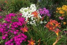 Great Plant Combinations / We love the color and texture combinations of these plants