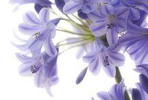 Flowers / Beautiful arrangements