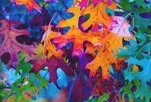 Color! / Bright colors