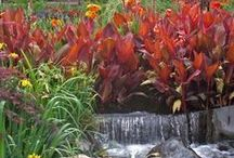 Plants in Water Features / Many plants add extra interest to ponds, pools, small water features and more.  Here are some great examples!