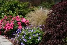 Landscaping Ideas / Landscaping can be a challenge.  Here are some great examples of simple landscape solutions.