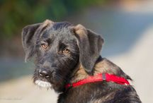 Dogs | Hunde / #Dogs #Hunde #buggy #pets #pet