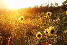 Spring Sun & Beautiful Flowers / Light, sun, spring