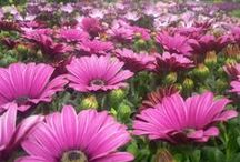 Beechdale / Images from the garden centre at Beechdale, come and visit - we'd love to see you :)   www.Beechdale.ie