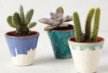 Home: Cacti