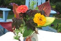 Cut Flower Gardens / Grow your own cut flowers for fun and profit.  It's easy and here area a few suggestions!