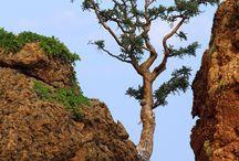 Nature élégante