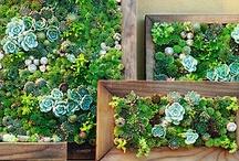 Living Walls / Vertical Garden ideas