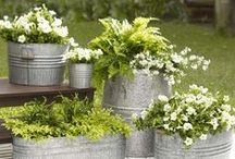 Ideas for Us: Container Planting