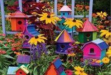 Birdhouses / by Debbie Hampson