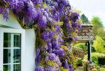 ogrody i kwiaty
