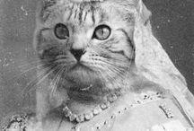 Cats : Aristocrats ... black-white.