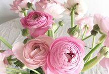 FL : pink Ranunculus.