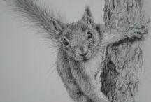 Art : Squirrels & Chipmunks.