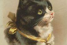 Cats : Vintage Postcards.