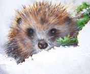 Art : Hedgehog.