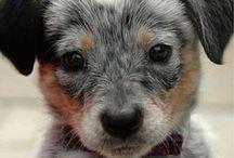 DOGS / Adorable doggos