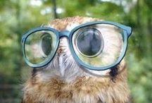 Owl / O.O