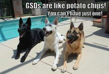 dawgs!!