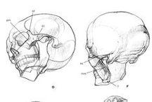 face+head+neck