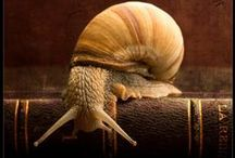 snail on the slope...
