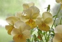 Flower Power / by Jenny Tonkin