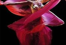 Dance arabe♥♥