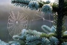 spider web in the wind...