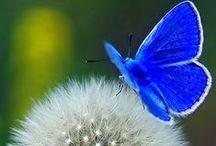 butterfly...breath of God