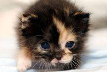 Animals- Cats / Cute Cats