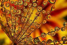 Colors - Orange / by Julie Banta