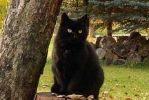Black Cats / Black cats