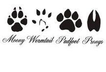 Les animaux / Les loups, les chiens, les chats, les chevreuils etc...