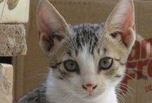 Cute Kitten / I love them