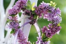 ~Lilacs~ / by Michelle