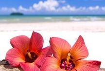 ~Island Paradise~ / by Michelle D