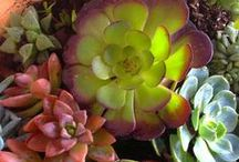 ~Succulents~ / by Michelle
