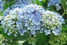 ~My Garden Grows Blue~ / by Michelle