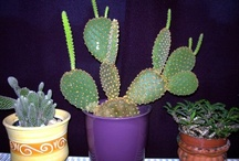Cacti love